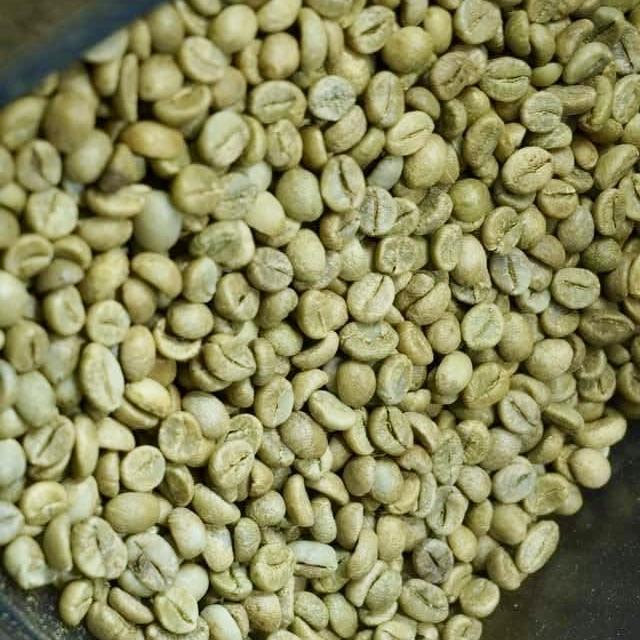 cà phê nhân sống S18
